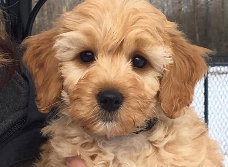 Puppy Training - Happy Hound