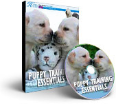 Happy Hound Training Videos - Puppy Training Essentials
