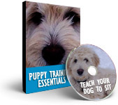 Happy Hound Training Videos - Teach your dog to sit