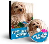 Happy Hound Training Videos - How to groom your puppy